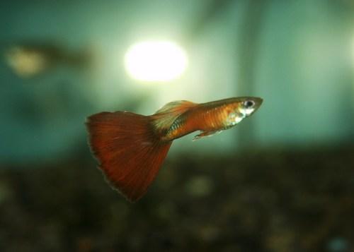 田端センター魚 022.JPG